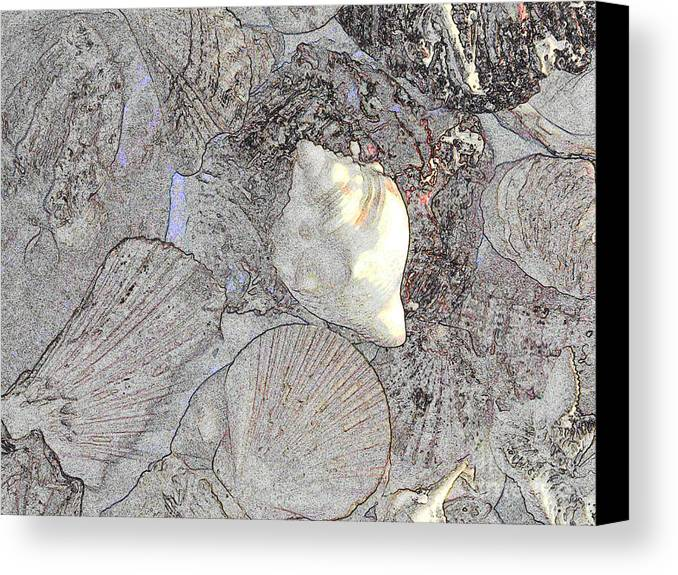 Diane Dimarco Art Canvas Print featuring the photograph White Shell by Diane DiMarco