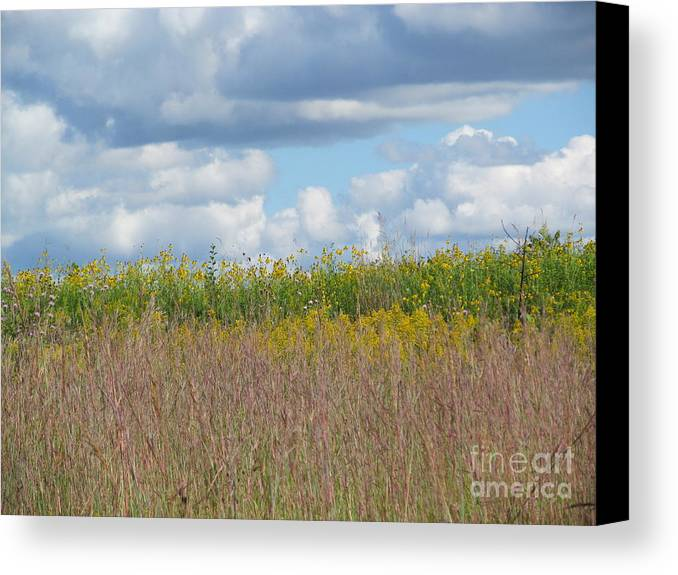 Meadows Canvas Print featuring the photograph Wildflowers And Ornamental Grass by Tina M Wenger
