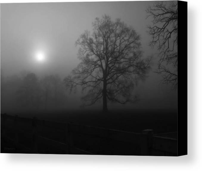 Landscape Canvas Print featuring the photograph Winter Oak In Fog by Deborah Smith