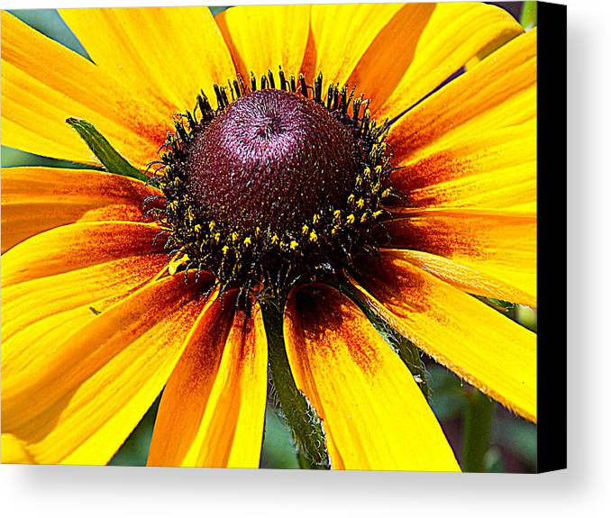 Yellow Canvas Print featuring the photograph Yellow Close Up by Miss Judith