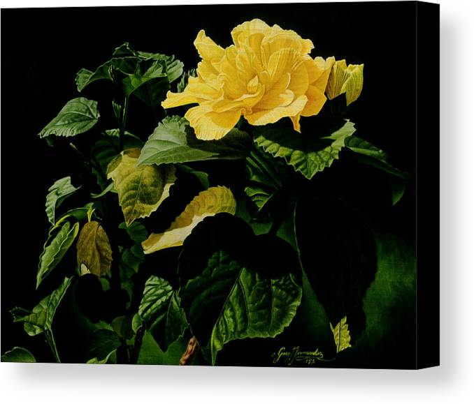 Floral Canvas Print featuring the painting Yellow Hibiscus by Gary Hernandez