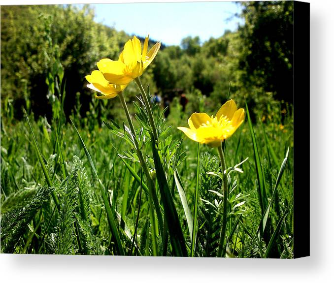 Flowers Canvas Print featuring the photograph Yellows by Lucy D