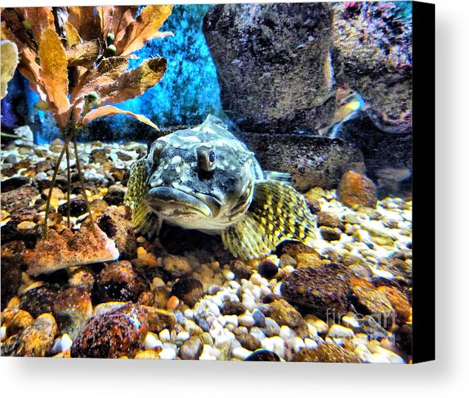 Fish Canvas Print featuring the photograph You Looking At Me? by Nancie DeMellia
