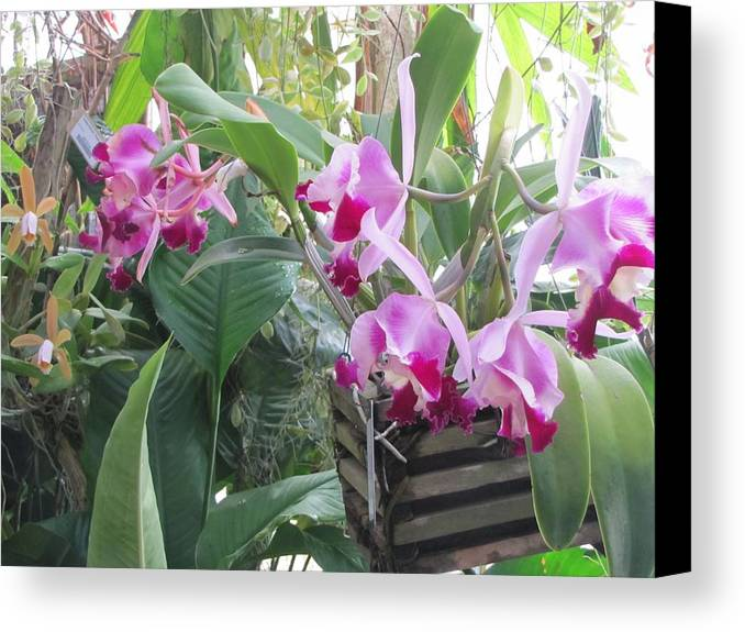 Flowers Canvas Print featuring the photograph 022 Hanging Out by Carol McKenzie