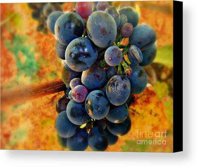Wine Canvas Print featuring the photograph Fall Harvest by Kevin Moore