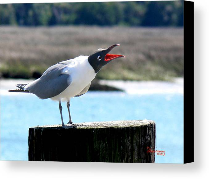Gull Canvas Print featuring the photograph Laughing Gull by Ericamaxine Price