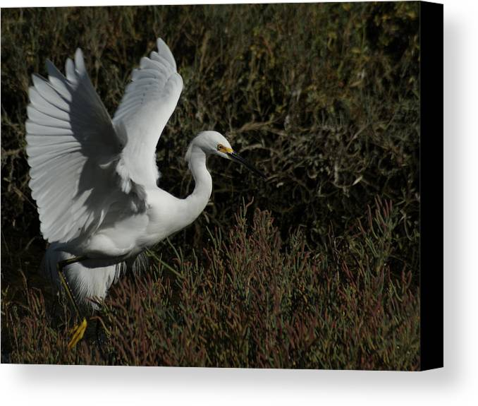 Birds Canvas Print featuring the photograph Lift Off by Ernie Echols