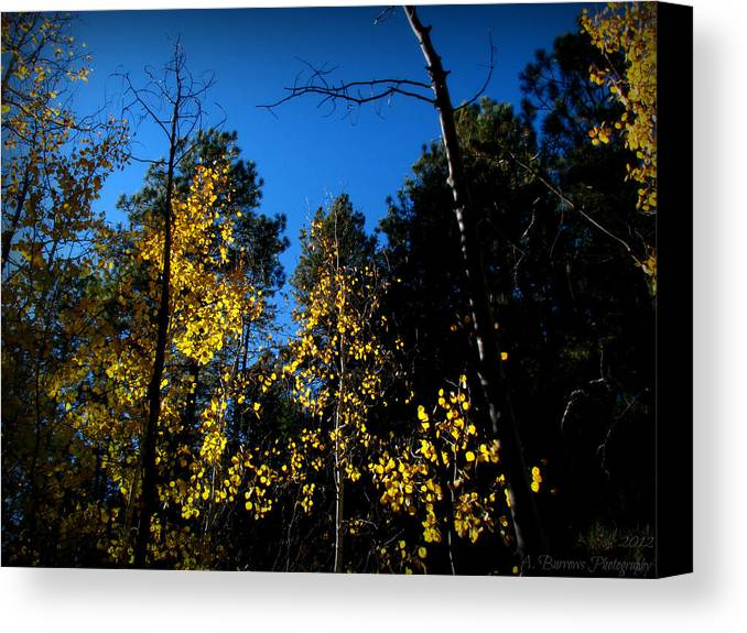 Bradshaw Mountains Canvas Print featuring the photograph What's Left Of The Autumn Leaves by Aaron Burrows