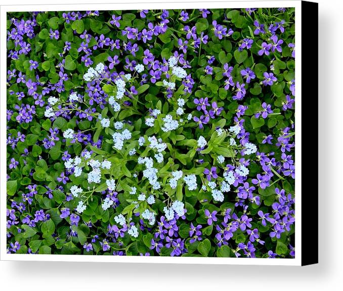 Light Canvas Print featuring the photograph A Circle Of Light by Frank Wickham