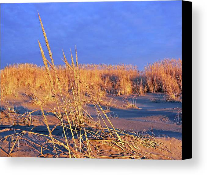 Gold Canvas Print featuring the photograph A Midas Touch by Pamela Patch
