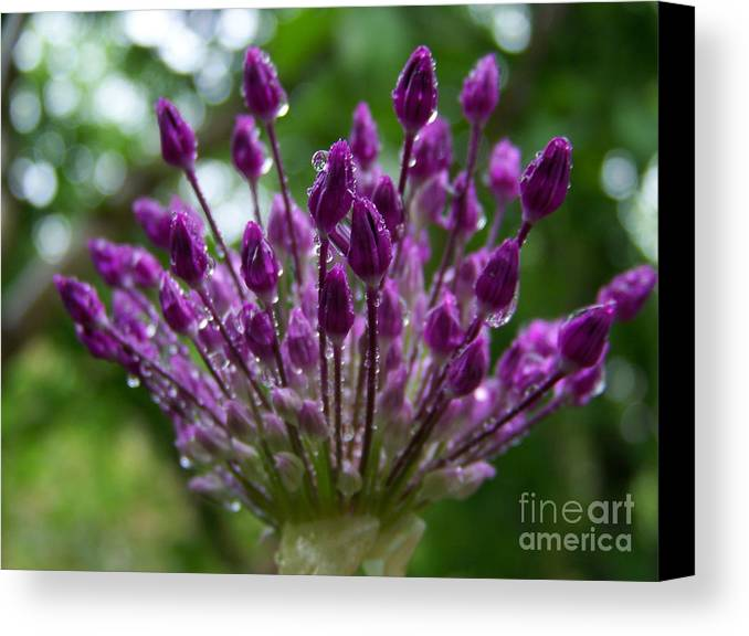 Ail Ornemental Canvas Print featuring the photograph Ail Ornemental by Sylvie Leandre