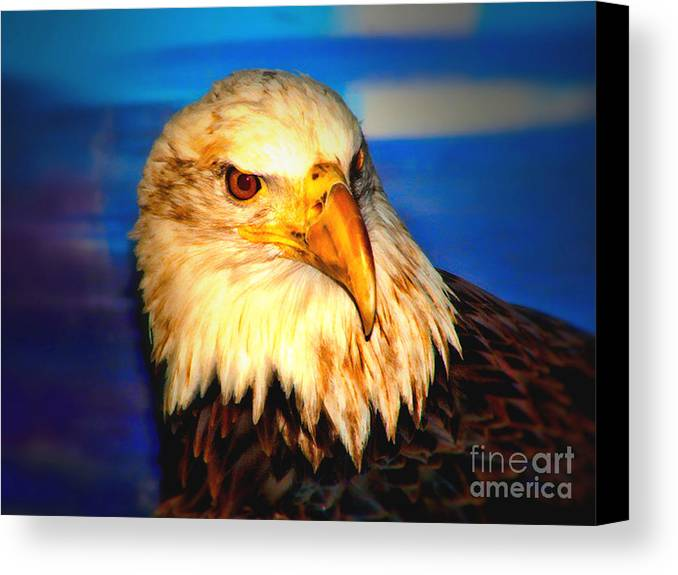 Angel Canvas Print featuring the photograph Angel The Bald Eagle by Tommy Anderson