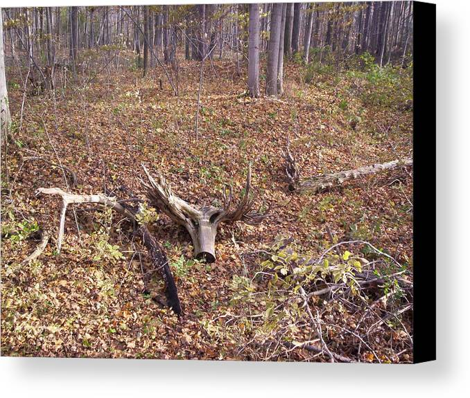 Tree Canvas Print featuring the photograph Antler Log by Corinne Elizabeth Cowherd