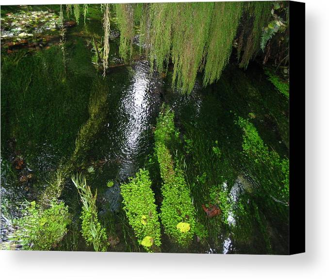 Pond Canvas Print featuring the photograph Bein' Green by Michael Merry