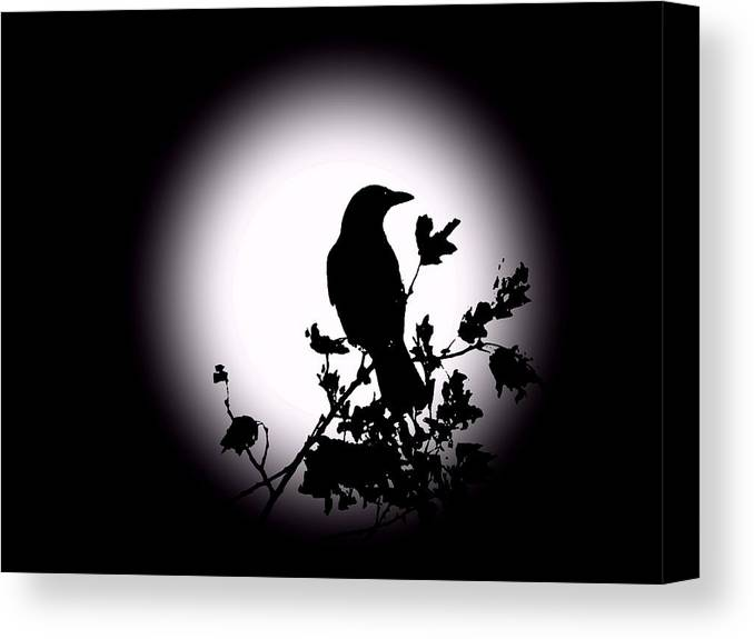 Blackbird Canvas Print featuring the photograph Blackbird In Silhouette by David Dehner