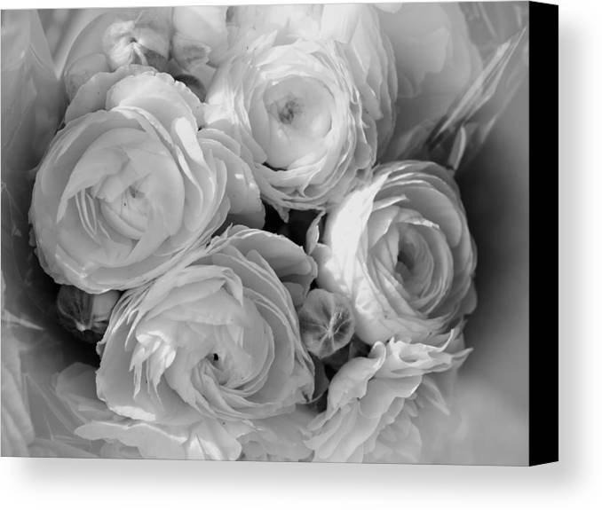 Roses Canvas Print featuring the photograph Cabbage Roses by Maureen Cunningham
