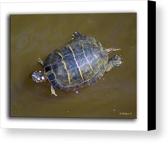 2d Canvas Print featuring the photograph Chester River Turtle by Brian Wallace