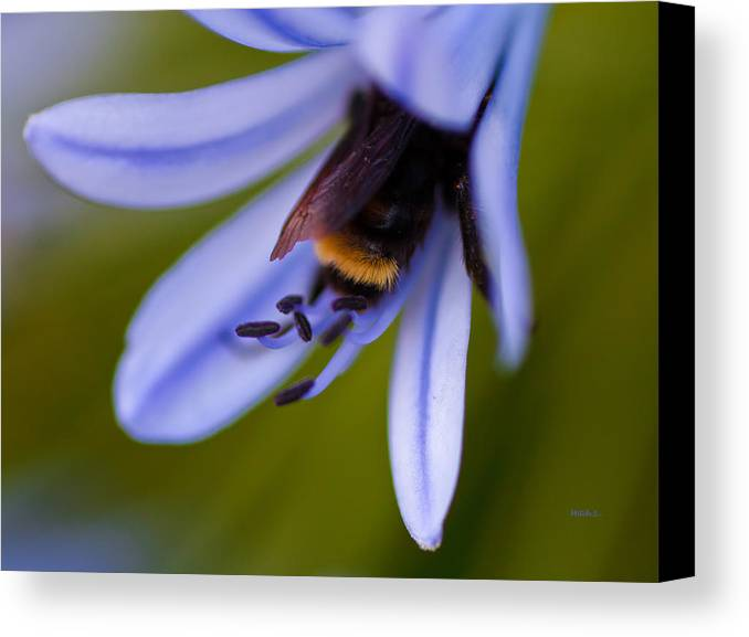 Cozy Canvas Print featuring the photograph Cozy by Mitch Shindelbower