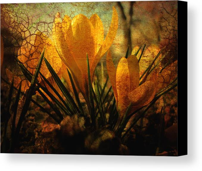 Flower Canvas Print featuring the photograph Crocus In Spring Bloom by Ann Powell