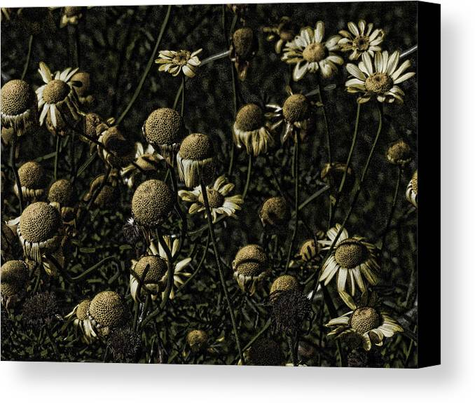 Daisies Photo Canvas Print featuring the photograph Daisies by Bonnie Bruno