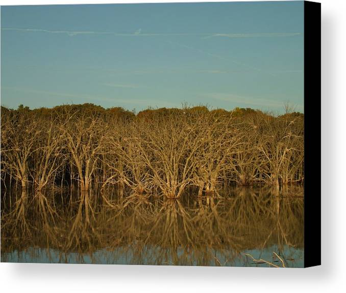 Dead Tree Illumination Canvas Print featuring the photograph Dead Tree Illumination by Brian Maloney