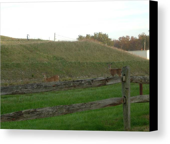 Deer Canvas Print featuring the photograph Deer Twin Siblings 1 by S Taylor