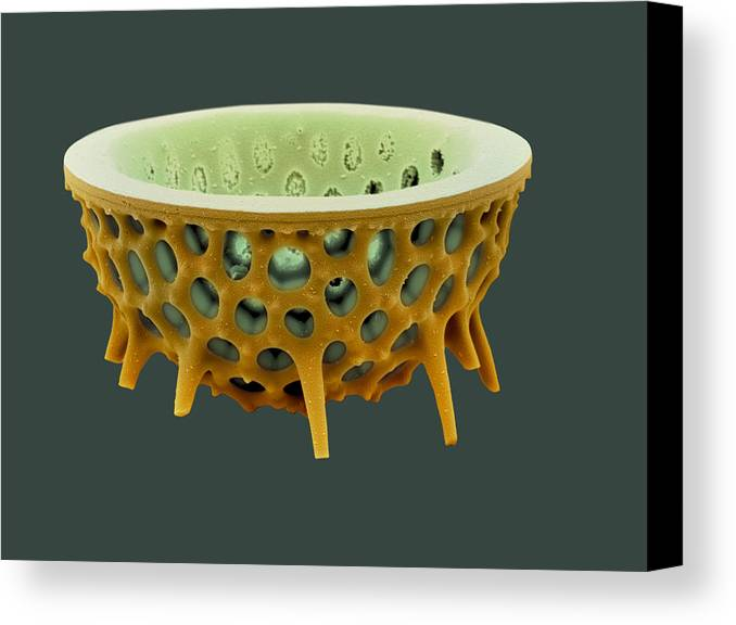 Frustule Canvas Print featuring the photograph Diatom, Sem by David Mccarthy