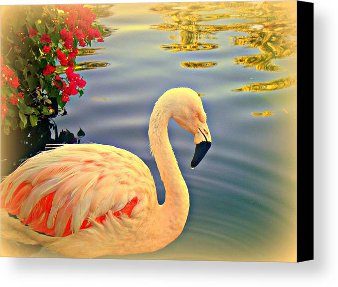 Flamingos Canvas Print featuring the photograph Dreamy Flamingo by Kevin Moore