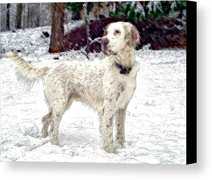 Mixed Media. Mixed Media Photography. Mixed Media Dighta Art. Mixed Media Digtal Photography. White Bird Dog Photography. Bird Dog Digtal Art. Bird Dog In Snow. Hunting Bird Dog Photography. Bird Dog Posing Photography. Bird Dog Pointing Photography. Canvas Print featuring the photograph Duke by James Steele