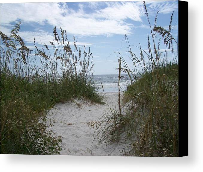Sand Dunes Canvas Print featuring the photograph Dune Path by Tiffney Heaning