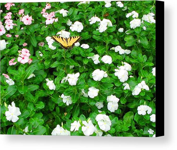 Butterfly Canvas Print featuring the photograph Eastern Tiger Swallowtail by April Patterson