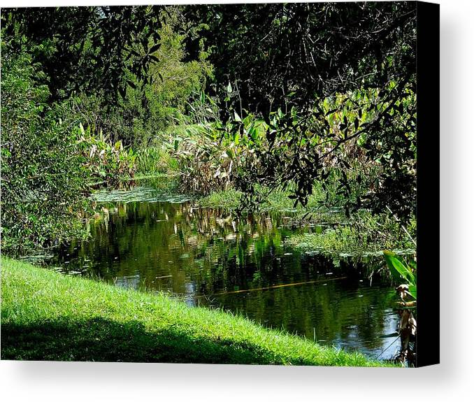 Nature Canvas Print featuring the photograph Fantasy In Green by Sheila Silverstein