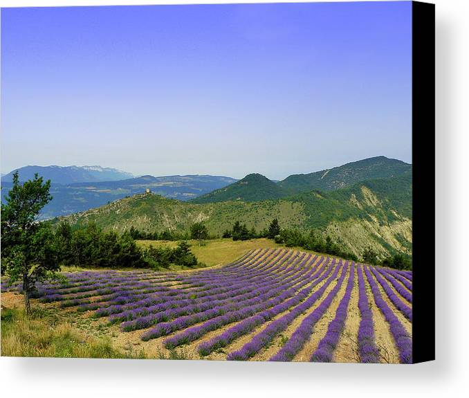 Horizontal Canvas Print featuring the photograph Field Of Lavender by Laurence Duris