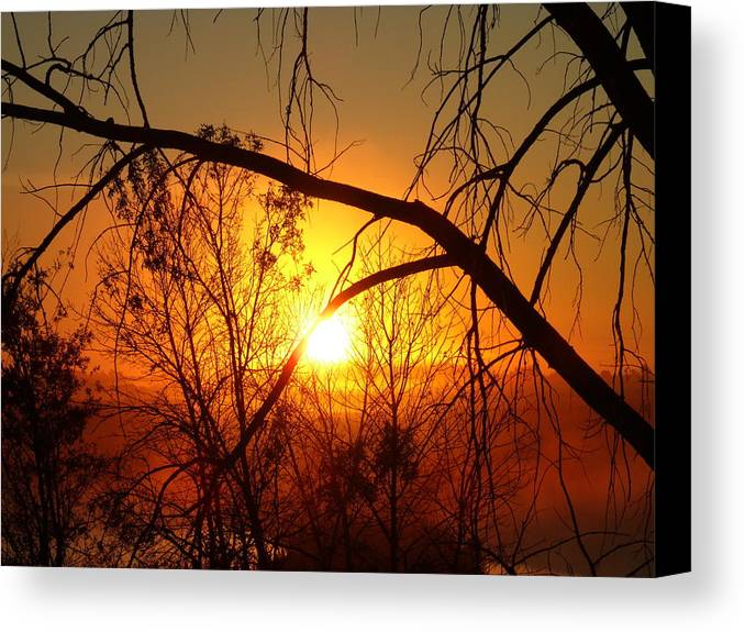 Foggy Forest Canvas Print featuring the photograph Foggy Forest Morning by Brian Maloney