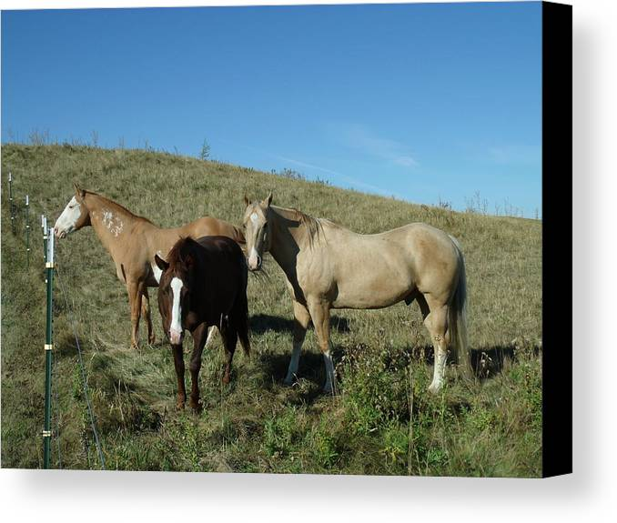 Fresh Horses Canvas Print featuring the photograph Fresh Horses by Brian Maloney