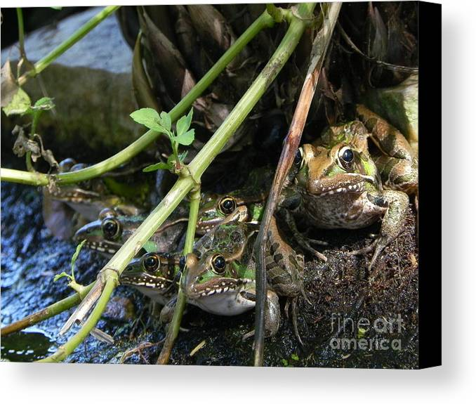 Cute Canvas Print featuring the photograph Gone To The Frogs by Jack Norton