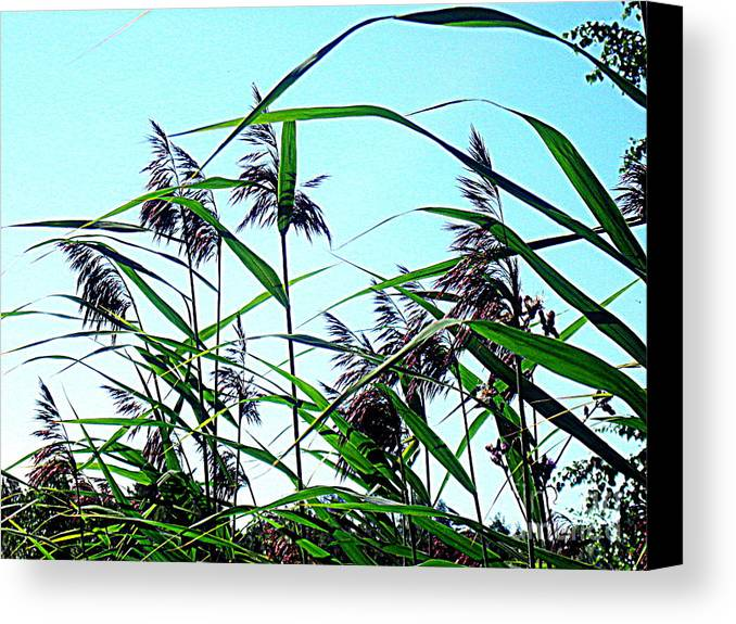 Blue Canvas Prints Canvas Print featuring the photograph Hay In The Summer by Pauli Hyvonen