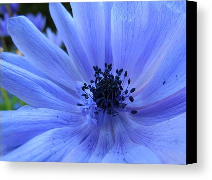Blue Canvas Print featuring the photograph Here I Am by Eva Kondzialkiewicz
