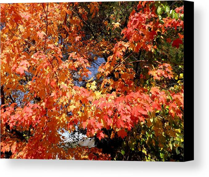 Autumn Leaves Canvas Print featuring the photograph Here Today Gone Tomorrow by Kate Gallagher