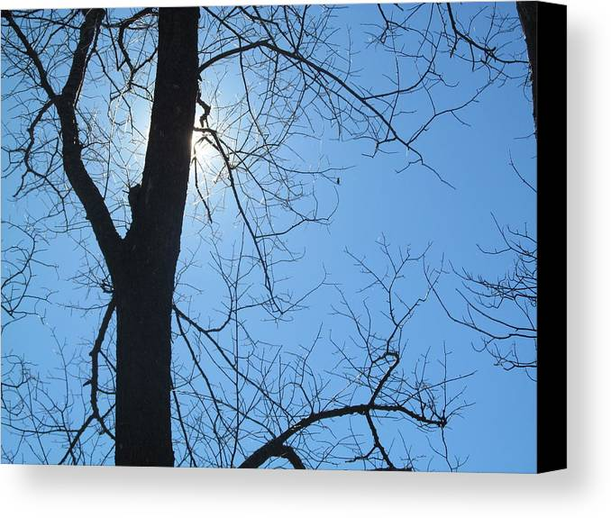 Tree Canvas Print featuring the photograph High Noon Sun by Tina M Wenger