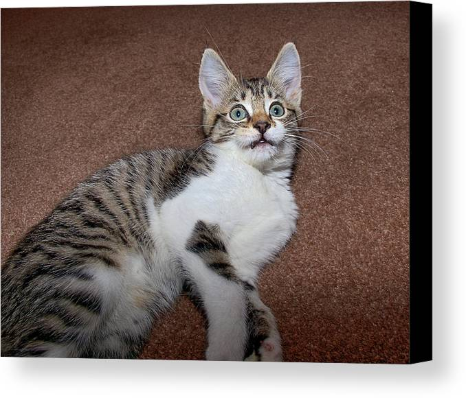 Horizontal Canvas Print featuring the photograph Kitten Laying On Carpet by CasaBlanca Images