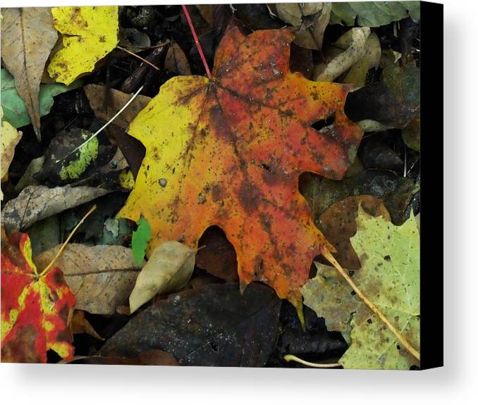 Leaves Canvas Print featuring the photograph Leaf Beauty by Dottie Gillespie
