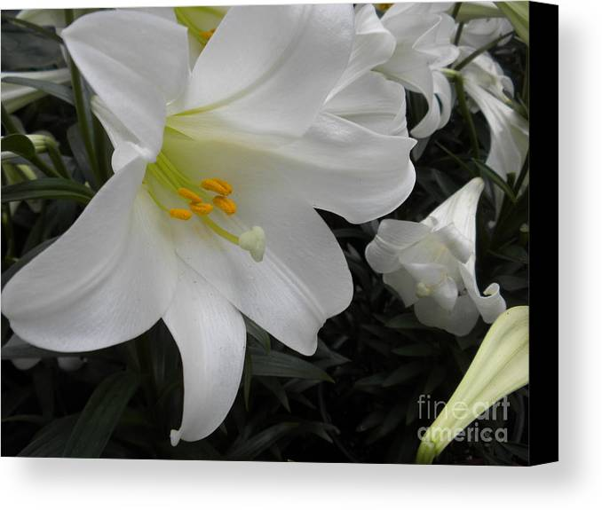 Flower Canvas Print featuring the photograph Lilies by Silvie Kendall
