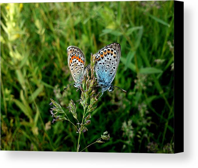 Butterfly Canvas Print featuring the photograph Loving by Lucy D