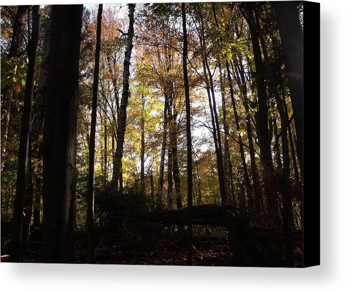 Photograph Canvas Print featuring the photograph Mono Cliffs Trees by Dottie Gillespie