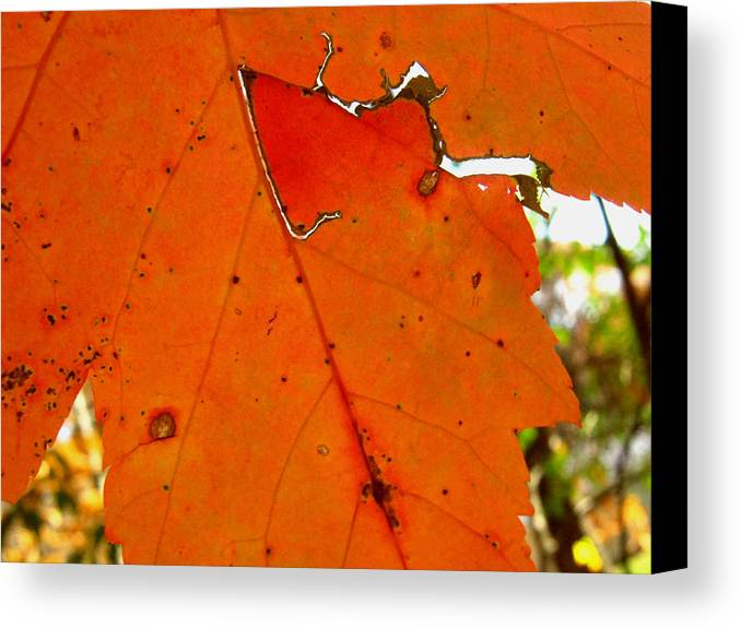 Nature Canvas Print featuring the photograph Nature Carvings by Shanna Blasingame