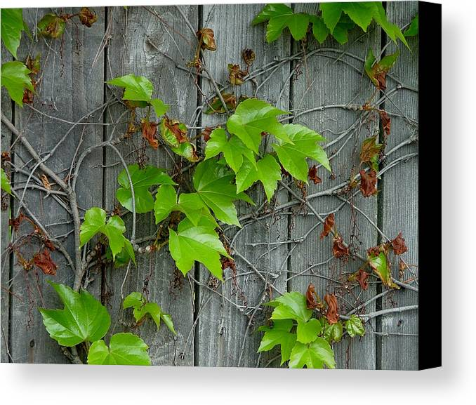 Wall Canvas Print featuring the photograph New Life by Dennis Pintoski