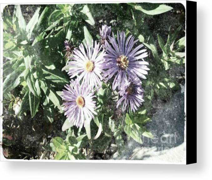 Flower Canvas Print featuring the digital art Old Style Flower 7 by Holley Jacobs