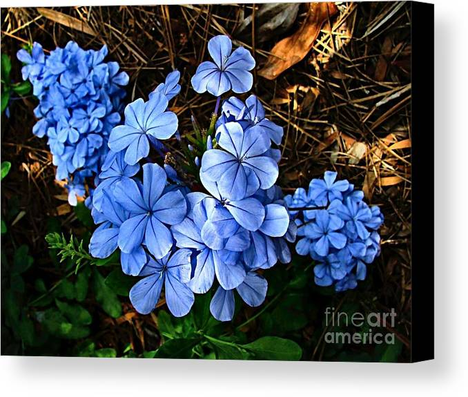 Blue Flowers Canvas Print featuring the photograph On The Forest Floor by Julie Dant