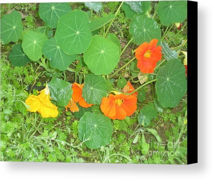 Orange Ivy Canvas Print featuring the photograph Orange Ivy by Jayne Kerr